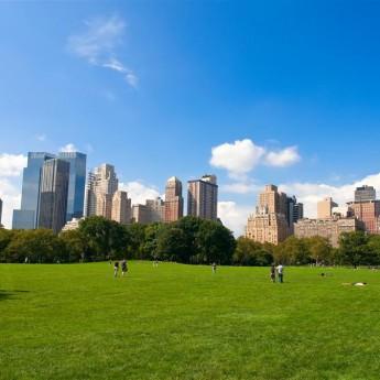 New York Language Studies International
