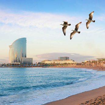 Vacanza Studio Barcellona Spagna conforme INPSieme | CIUDAD UNIVERSITARIA-Vacanza-Studio-Spagna-Inpsieme-18-345x345