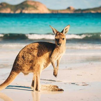 Vacanza Studio AUSTRALIA conforme INPSIEME-Vacanza-Studio-Australia-Inpsieme-3-1-345x345