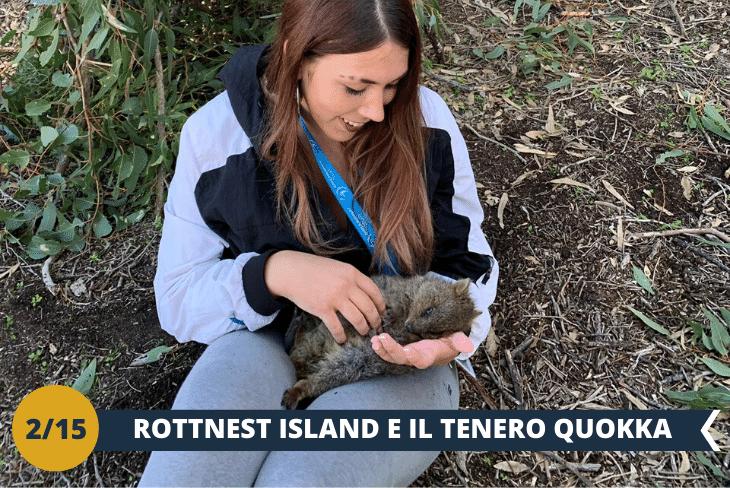 """ESCURSIONE DI INTERA GIORNATA a ROTTNEST ISLAND che ti farà fare un viaggio indietro nel tempo, quando la vita era semplice e tranquilla. Con le sue spiagge, una barriera corallina ricca di pesci tropicali e con edifici storici, ospita anche una vera star di Instagram: il dolcissimo QUOKKA, un marsupiale che si trova solo in questa zona. Questa deliziosa creatura è stata definita """"l'animale più felice del mondo"""", grazie al suo simpatico sorriso e alle guanciotte a favore di camera per un selfie indimenticabile"""