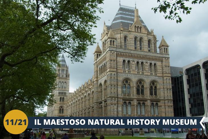 Visita al magnifico NATURAL HISTORY MUSEUM, il museo di storia naturale con milioni di specie animali particolarissime (escursione di mezza giornata)