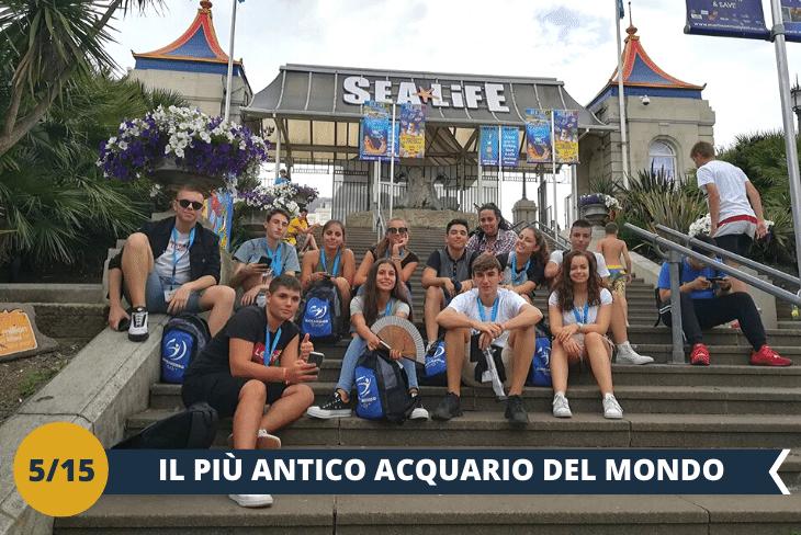 SEA LIFE (INGRESSO INCLUSO), il più antico acquario operativo del mondo, con oltre 500 creature marine presenti (escursioni di mezza giornata)