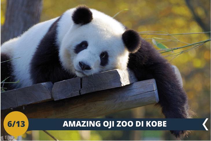 OJI ZOO (INGRESSO INCLUSO): escursione allo zoo municipale di Kobe ricco di meravigliosi animali e del tenero e inconfondibile panda. In serata faremo un'immancabile walking tour nell'area di China Town, una zona con oltre un centinaio di ristoranti, negozi e un tempio cinese. (escursione di mezza giornata)