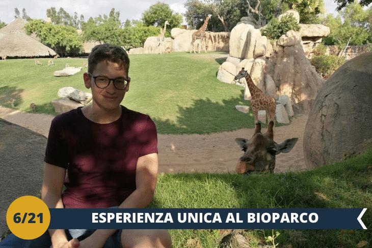 BIOPARCO (INGRESSO INCLUSO), il parco zoologico senza barriere più grande d'Europa dove si potranno ammirare specie animali provenienti da tutto il mondo (escursione mezza giornata)