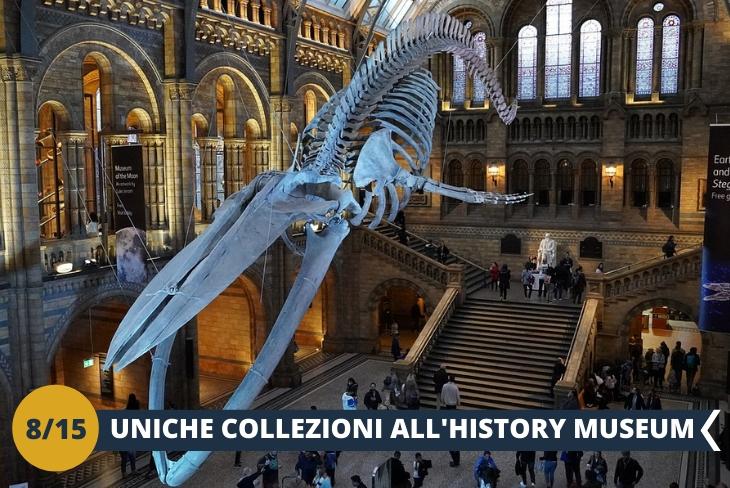 NATURAL HISTORY MUSEUM è il celebre museo di storia naturale di Londra, tra i più grandi al mondo. Potrete ammirare collezioni di animali, piante, rocce e fossili in un meraviglioso viaggio alla scoperta del pianeta Terra (escursione di mezza giornata)