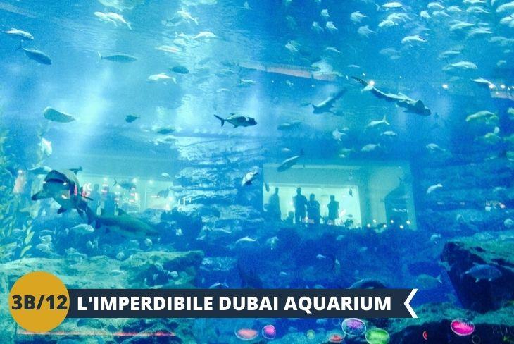 Acquario: Visita all'acquario di Dubai,  che con i suoi oltre dieci milioni di litri d'acqua ospita migliaia di pesci e di altri animali acquatici